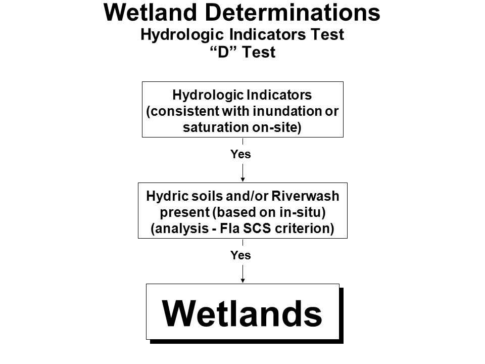 "Wetland Determinations Hydrologic Indicators Test ""D"" Test Hydric soils and/or Riverwash present (based on in-situ) (analysis - Fla SCS criterion) Wet"