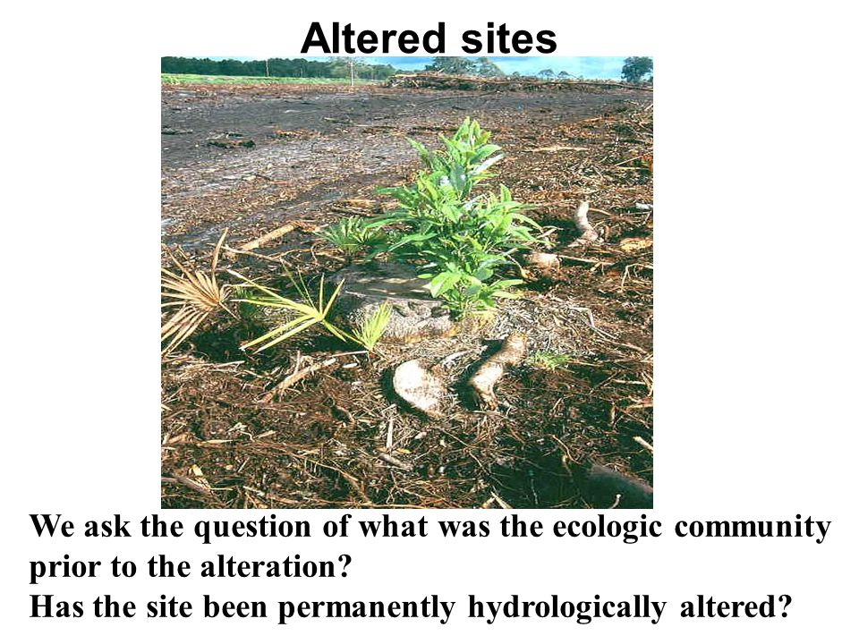 Altered sites We ask the question of what was the ecologic community prior to the alteration? Has the site been permanently hydrologically altered?