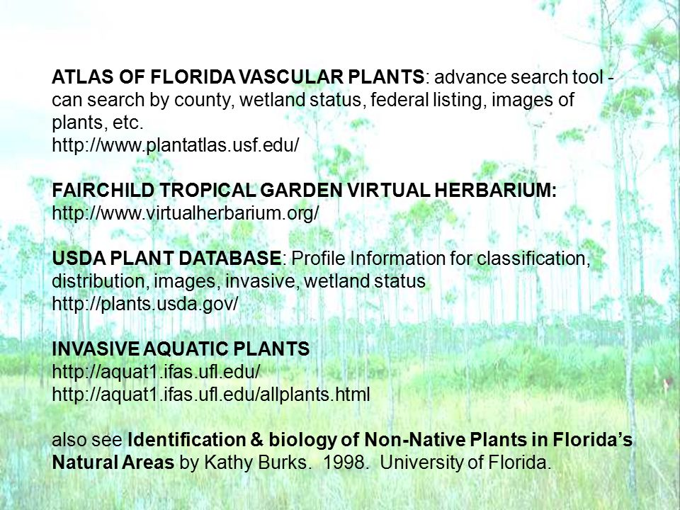 ATLAS OF FLORIDA VASCULAR PLANTS: advance search tool - can search by county, wetland status, federal listing, images of plants, etc. http://www.plant