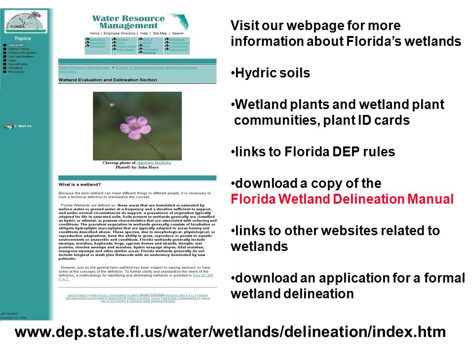 www.dep.state.fl.us/water/wetlands/delineation/index.htm Visit our webpage for more information about Florida's wetlands Hydric soils Wetland plants a