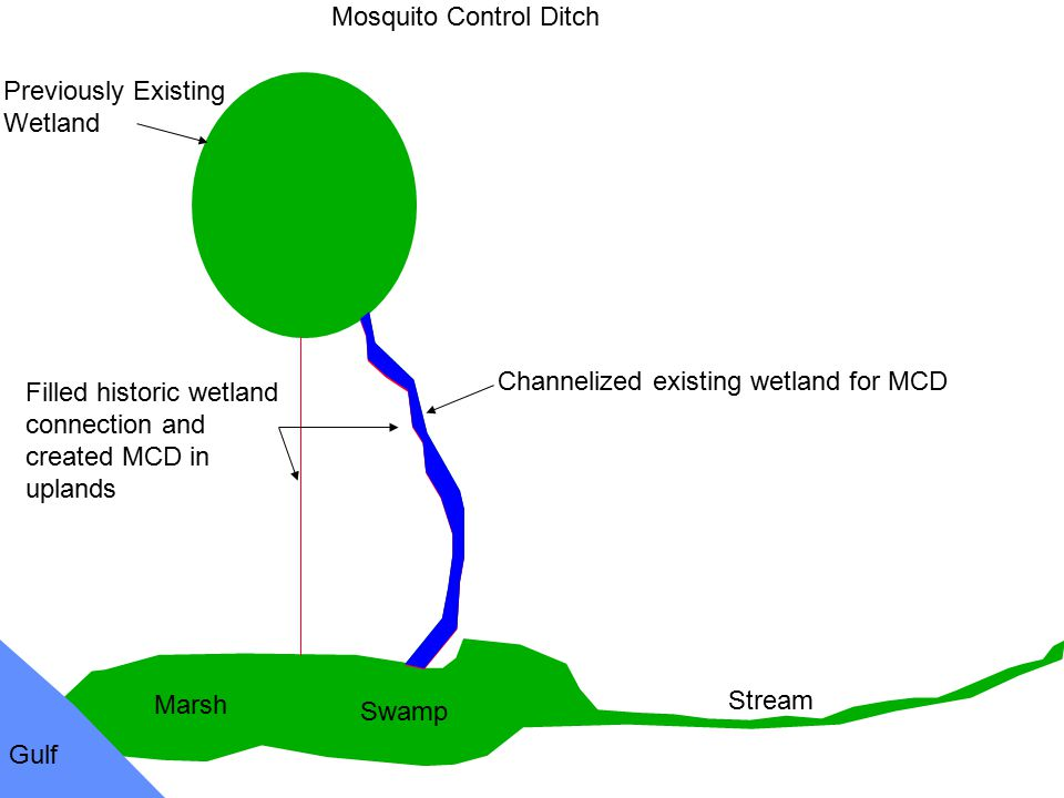 Previously Existing Wetland Swamp Marsh Gulf Stream Mosquito Control Ditch Filled historic wetland connection and created MCD in uplands Channelized e
