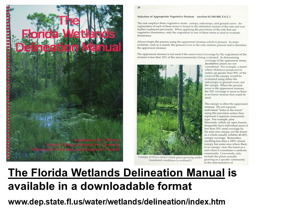 The Florida Wetlands Delineation Manual is available in a downloadable format www.dep.state.fl.us/water/wetlands/delineation/index.htm