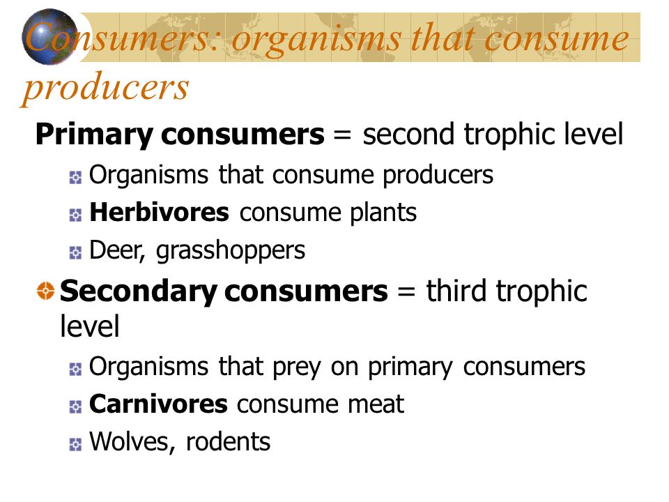 Consumers: organisms that consume producers Primary consumers = second trophic level Organisms that consume producers Herbivores consume plants Deer, grasshoppers Secondary consumers = third trophic level Organisms that prey on primary consumers Carnivores consume meat Wolves, rodents