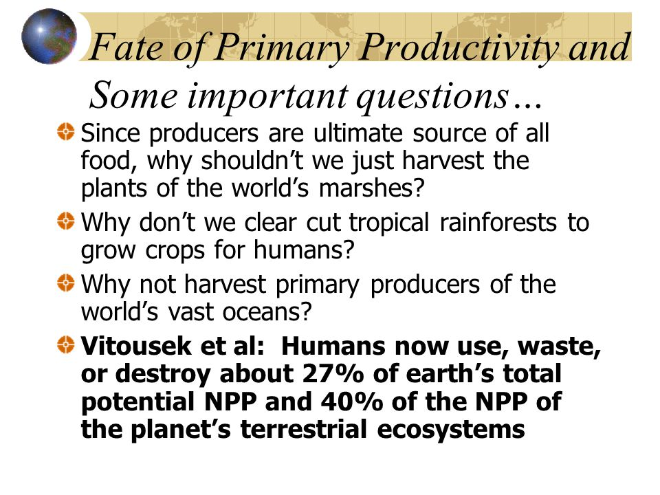 Fate of Primary Productivity and Some important questions… Since producers are ultimate source of all food, why shouldn't we just harvest the plants o
