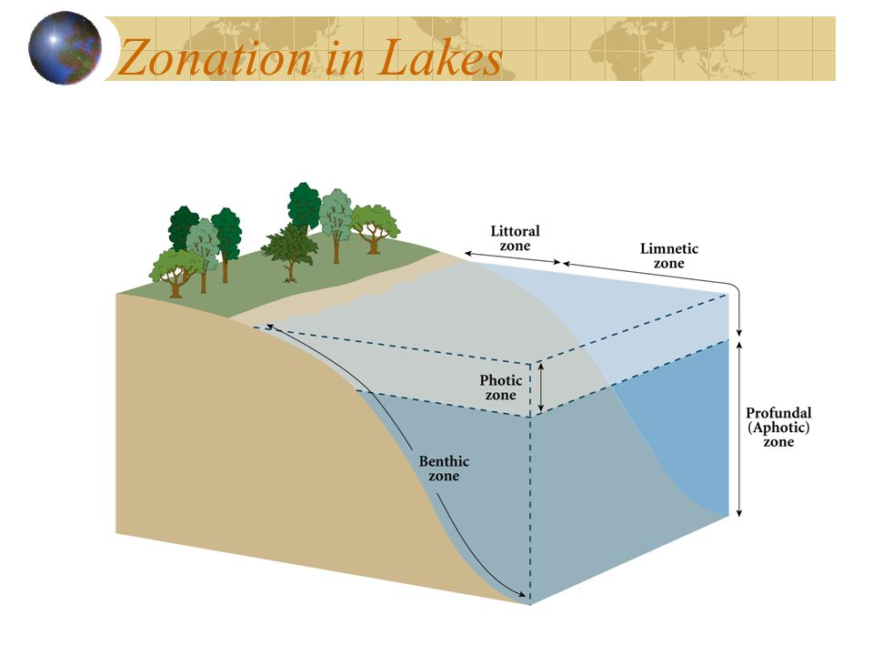 Zonation in Lakes