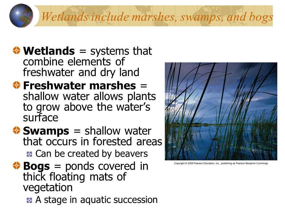 Wetlands include marshes, swamps, and bogs Wetlands = systems that combine elements of freshwater and dry land Freshwater marshes = shallow water allo