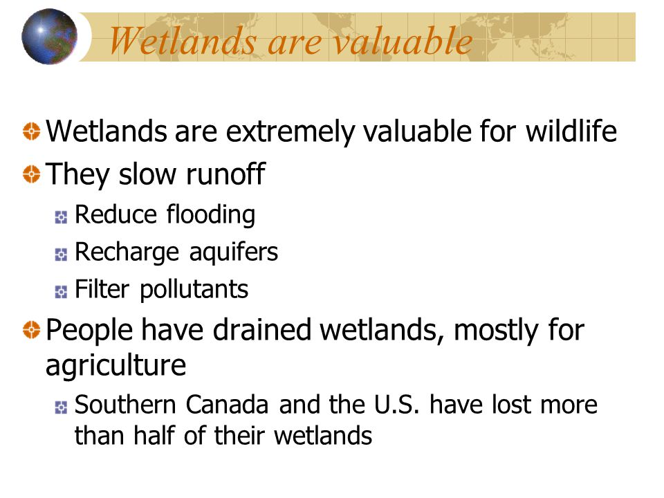 Wetlands are valuable Wetlands are extremely valuable for wildlife They slow runoff Reduce flooding Recharge aquifers Filter pollutants People have drained wetlands, mostly for agriculture Southern Canada and the U.S.
