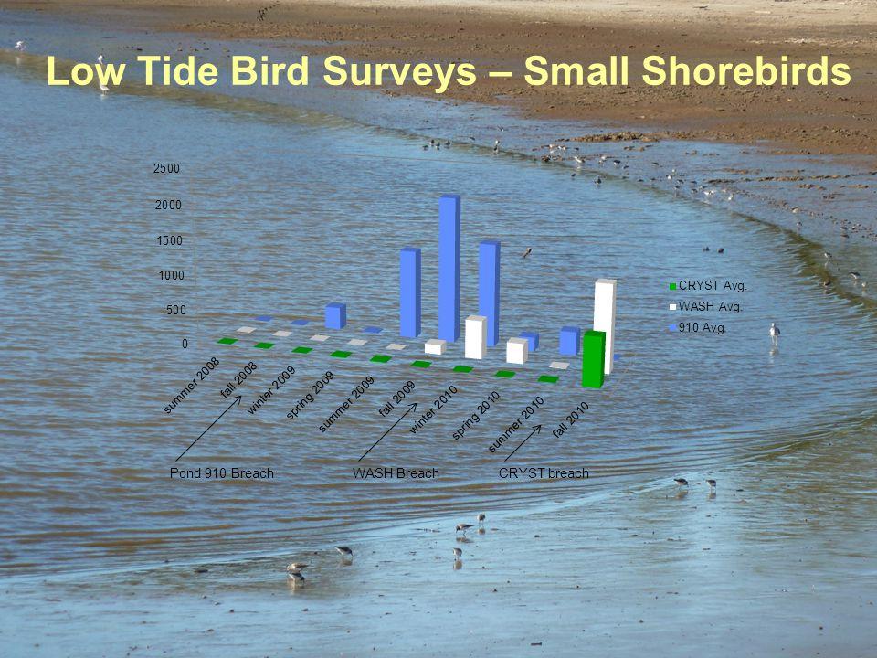 Low Tide Bird Surveys – Small Shorebirds Pond 910 BreachCRYST breachWASH Breach