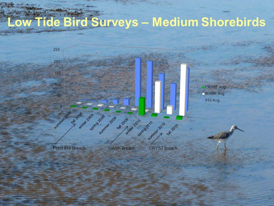 Low Tide Bird Surveys – Medium Shorebirds Pond 910 BreachCRYST breachWASH Breach