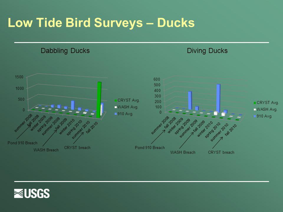 Low Tide Bird Surveys – Ducks Pond 910 Breach CRYST breachWASH Breach Dabbling DucksDiving Ducks CRYST breach Pond 910 Breach WASH Breach