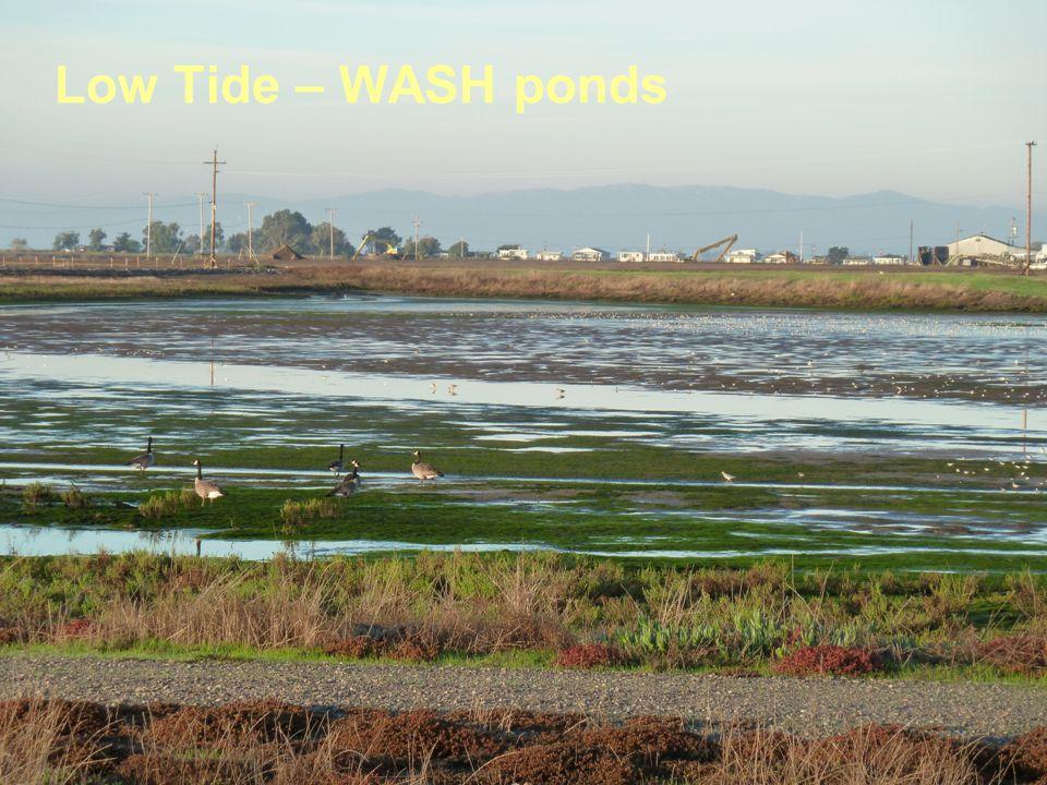 Low Tide – WASH ponds