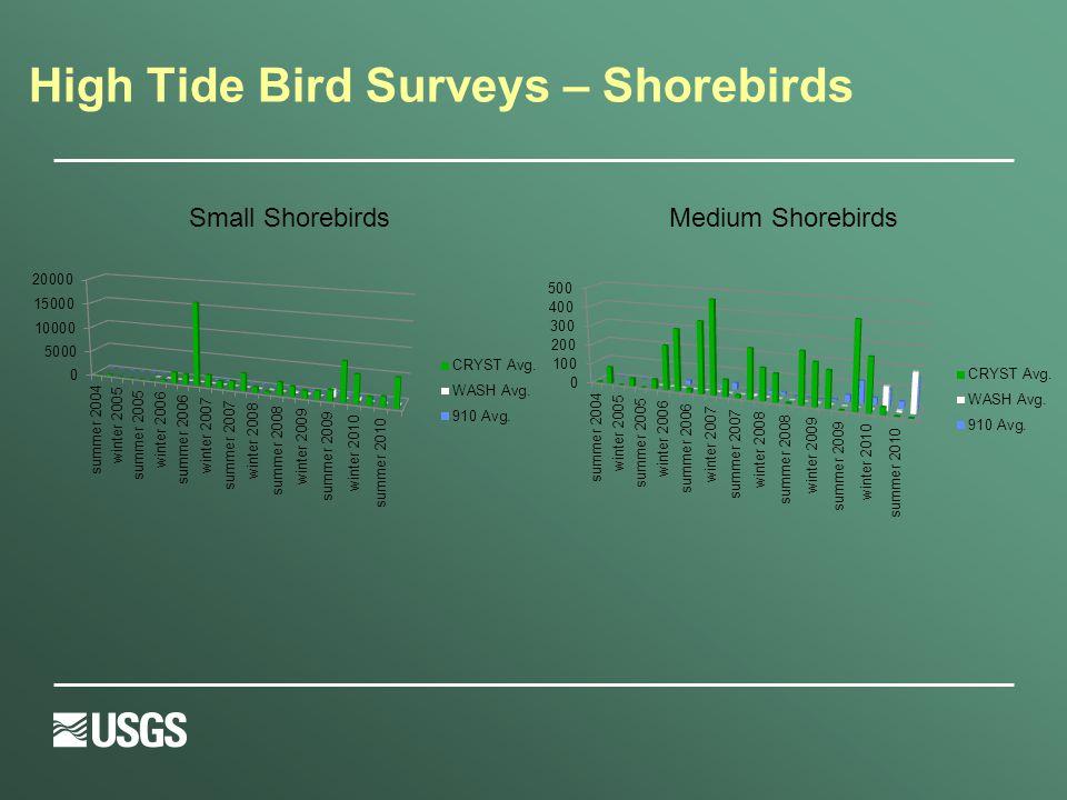 High Tide Bird Surveys – Shorebirds Small ShorebirdsMedium Shorebirds
