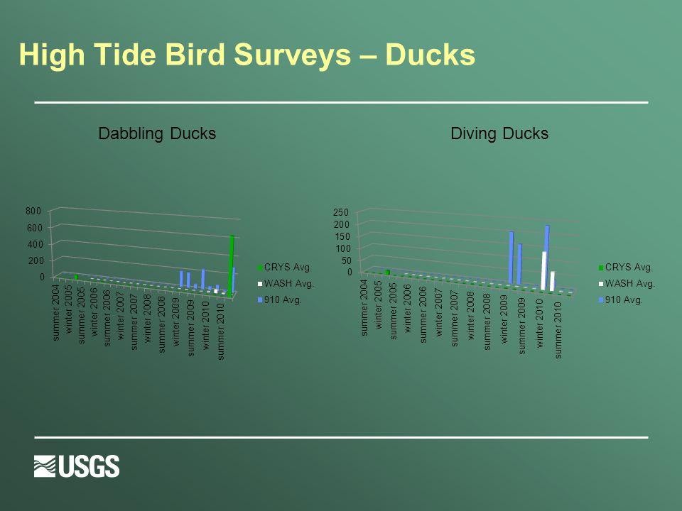 High Tide Bird Surveys – Ducks Diving DucksDabbling Ducks