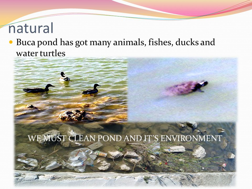natural Buca pond has got many animals, fishes, ducks and water turtles WE MUST CLEAN POND AND IT'S ENVIRONMENT