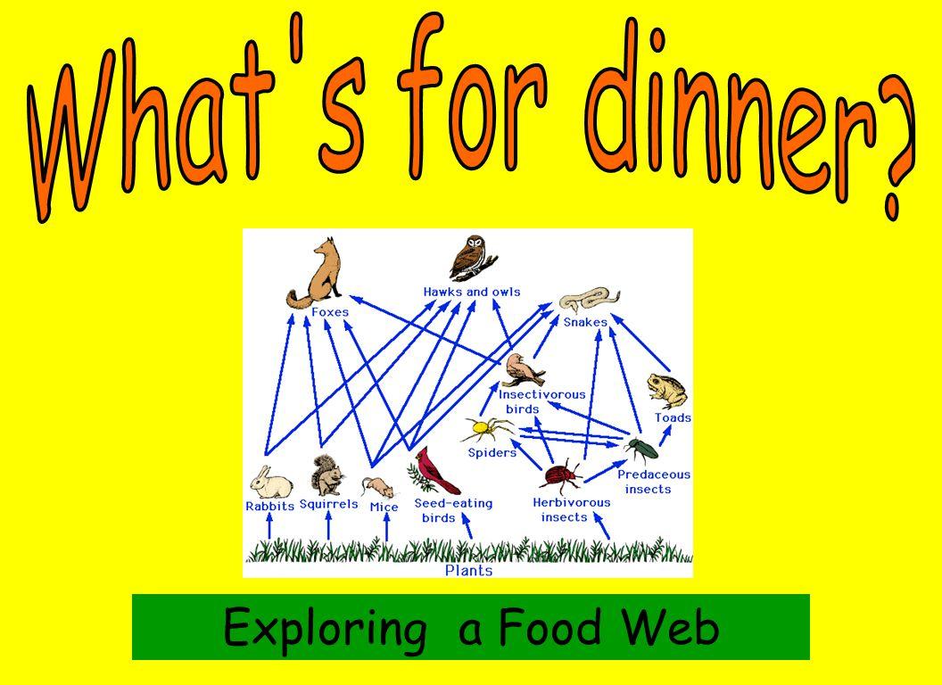 Exploring a Food Web