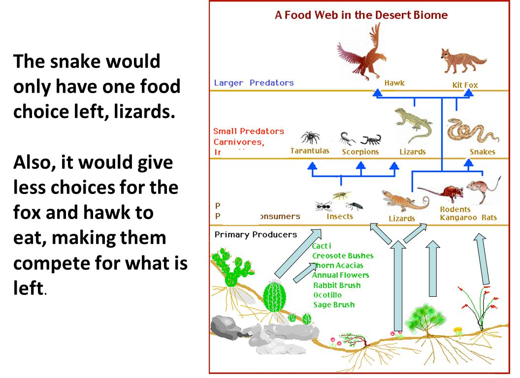 The snake would only have one food choice left, lizards. Also, it would give less choices for the fox and hawk to eat, making them compete for what is