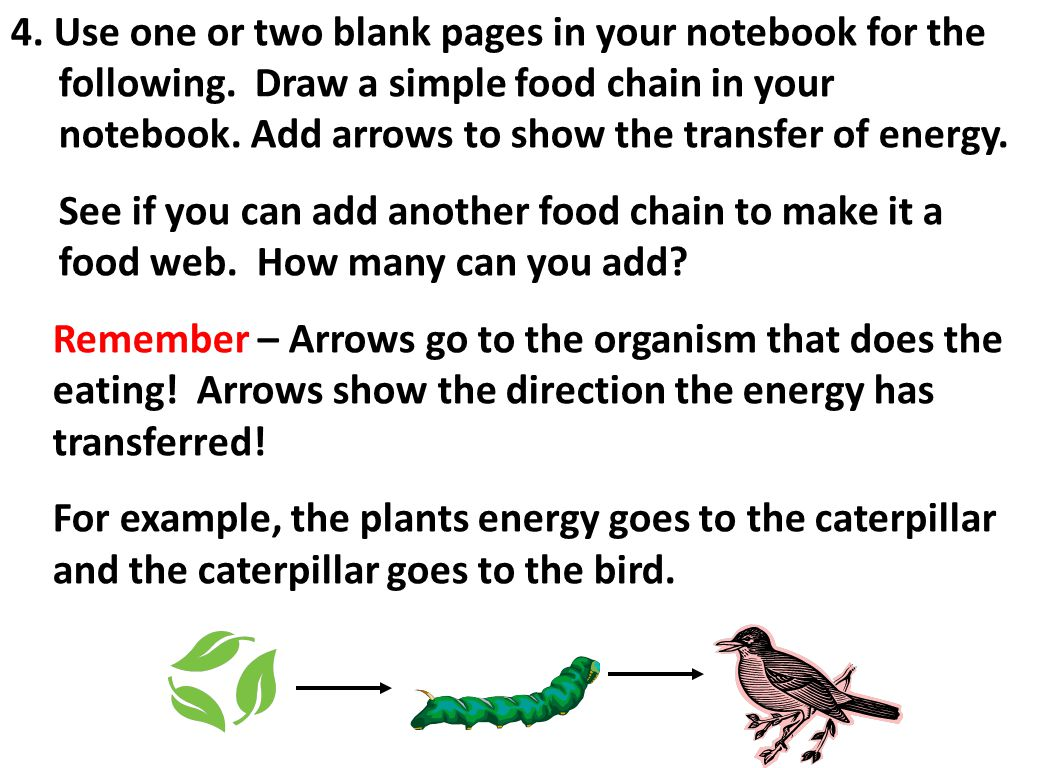 4. Use one or two blank pages in your notebook for the following. Draw a simple food chain in your notebook. Add arrows to show the transfer of energy