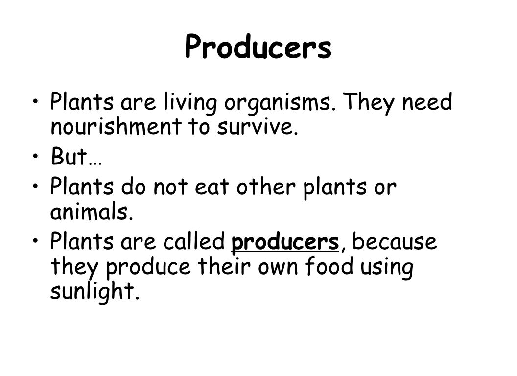 1.Which organisms are the producers?_________________ 2.