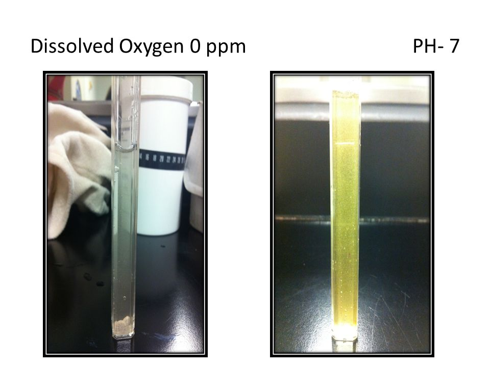 Dissolved Oxygen 0 ppm PH- 7