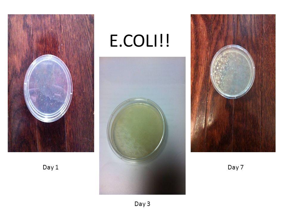 E.COLI!! Day 1 Day 3 Day 7