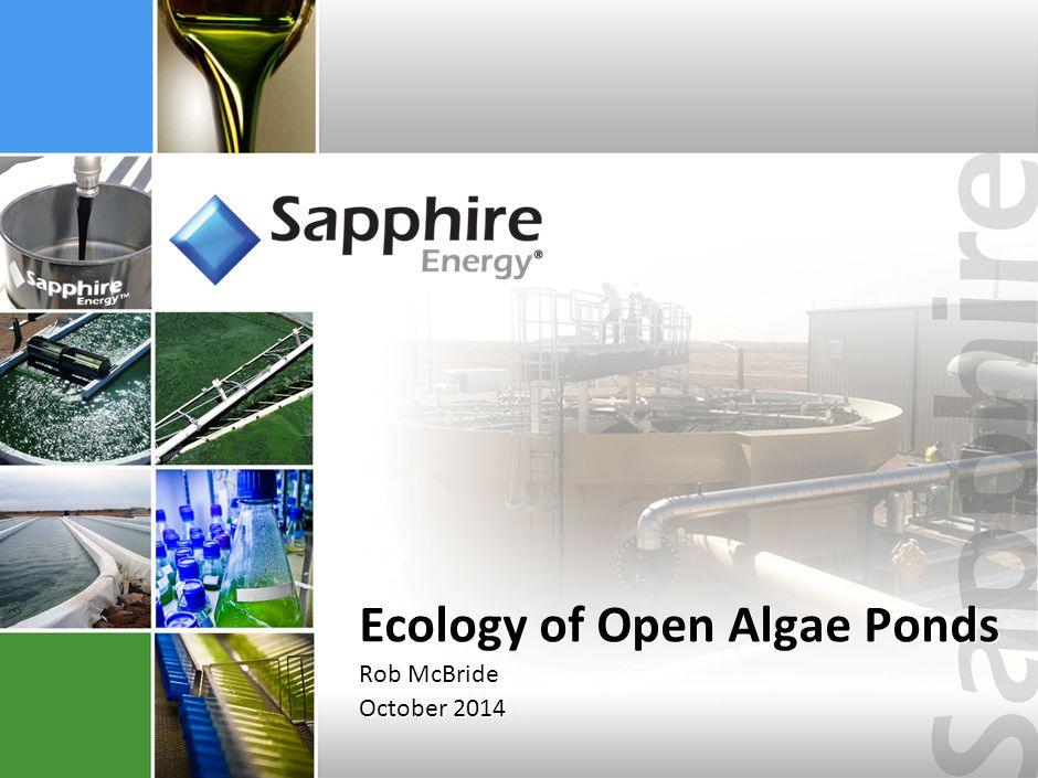 Sapphire Produces Valuable Products From Algae, Sunlight, & CO 2 SAPPHIRE ENERGY 1