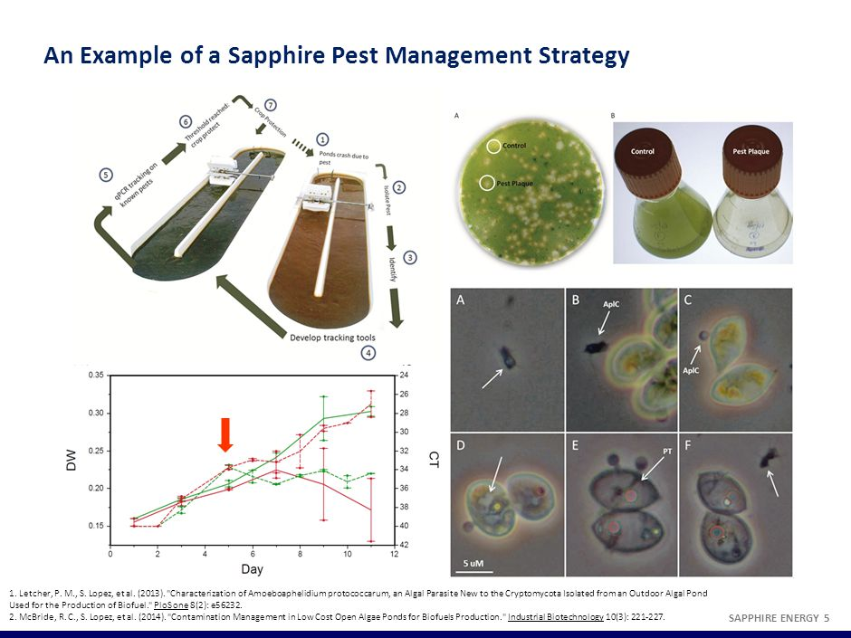 An Example of a Sapphire Pest Management Strategy SAPPHIRE ENERGY 5 1.