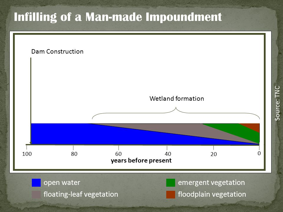 open water floating-leaf vegetation emergent vegetation floodplain vegetation Dam Construction Wetland formation years before present 100 80 60 40 20
