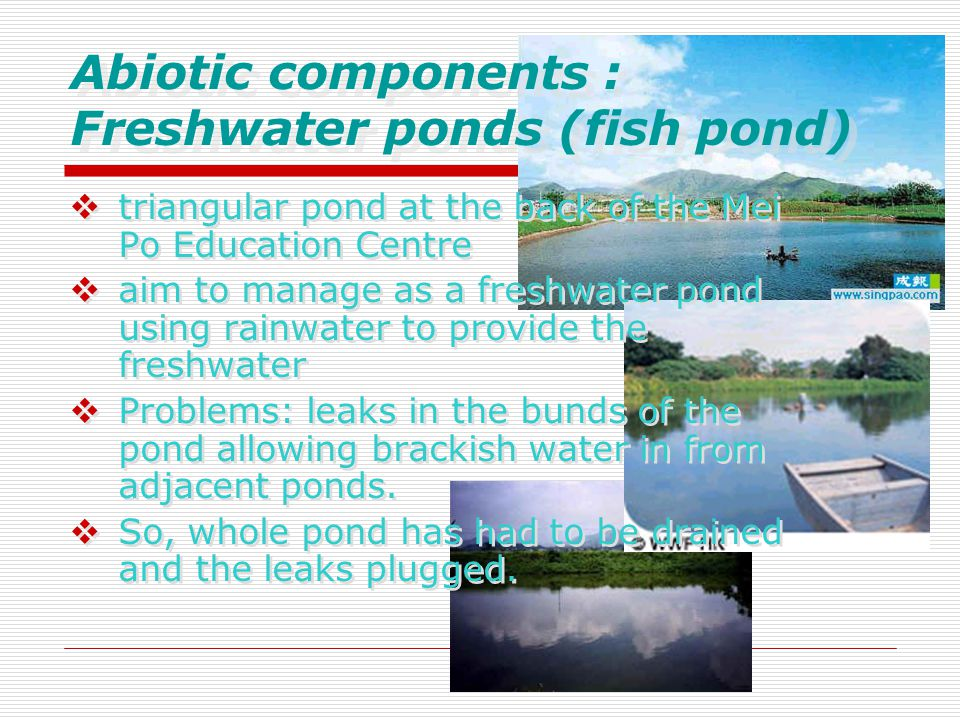 Abiotic components : Freshwater ponds (fish pond)  triangular pond at the back of the Mei Po Education Centre  aim to manage as a freshwater pond using rainwater to provide the freshwater  Problems: leaks in the bunds of the pond allowing brackish water in from adjacent ponds.