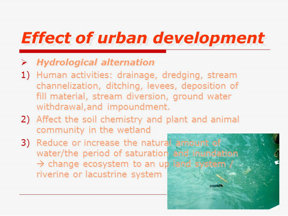 Effect of urban development  Hydrological alternation 1)Human activities: drainage, dredging, stream channelization, ditching, levees, deposition of fill material, stream diversion, ground water withdrawal,and impoundment.