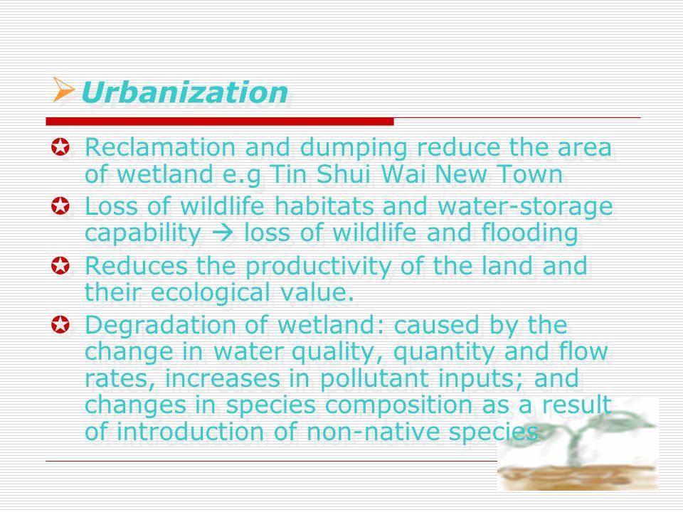  Urbanization  U Urbanization  Reclamation and dumping reduce the area of wetland e.g Tin Shui Wai New Town  Loss of wildlife habitats and water-