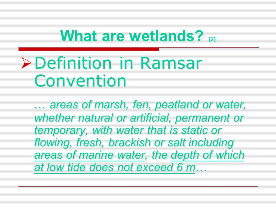Importance of wetlands As a winter ground Support many Species Improve water quality Prevent flooding Economic benefit As an educational environment As a winter ground Support many Species Improve water quality Prevent flooding Economic benefit As an educational environment