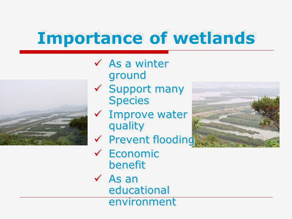 Importance of wetlands As a winter ground Support many Species Improve water quality Prevent flooding Economic benefit As an educational environment A