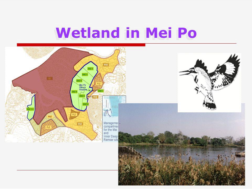 Wetland in Mei Po