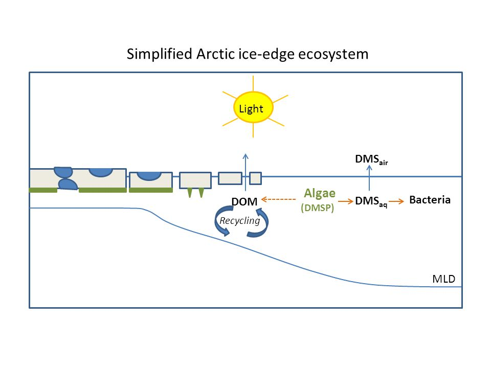 DOM Algae (DMSP) DMS aq Bacteria DMS air MLD Light Simplified Arctic ice-edge ecosystem Recycling