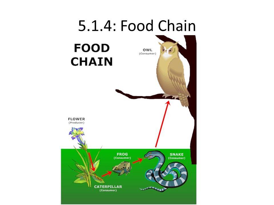 5.1.4: Food Chain