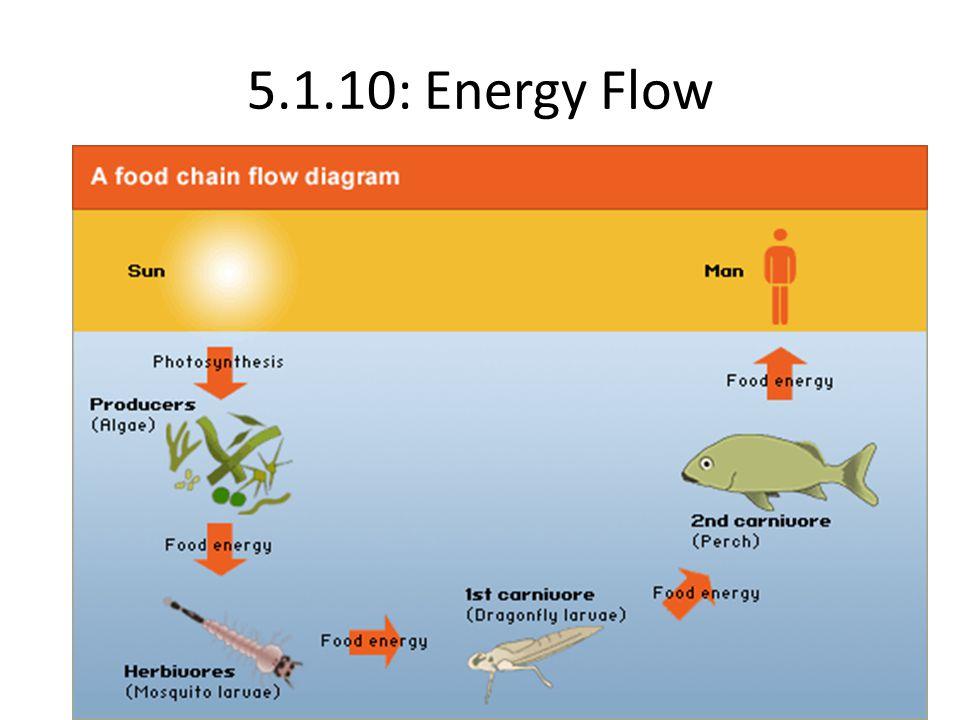 5.1.10: Energy Flow