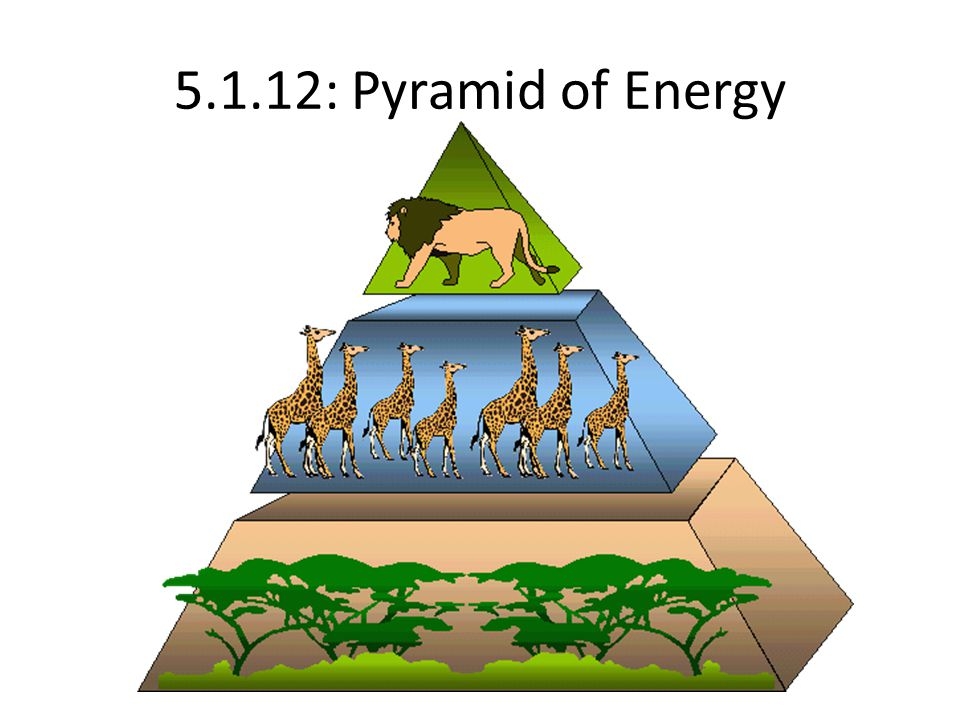 5.1.12: Pyramid of Energy