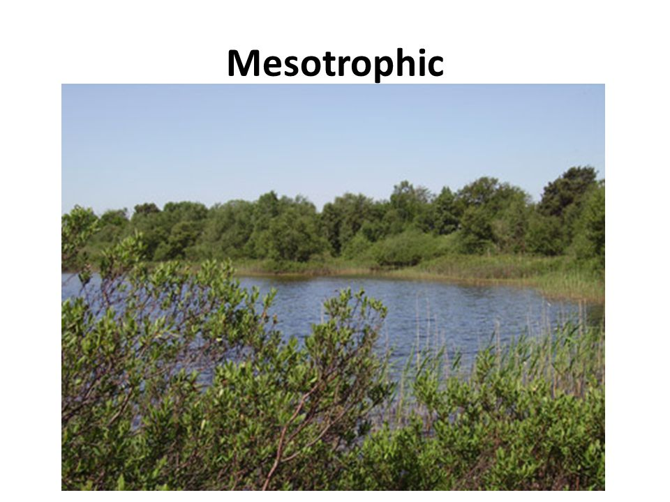 Mesotrophic