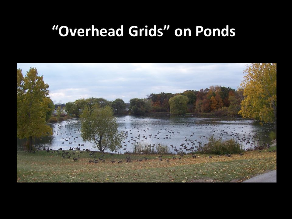 Overhead Grids on Ponds