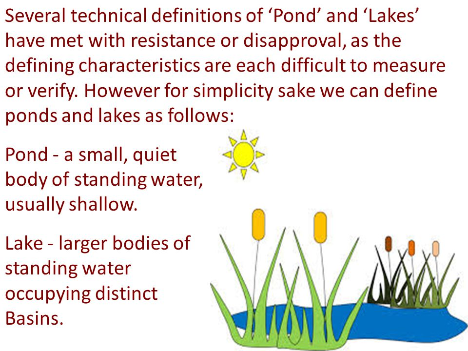 Lakes and ponds are important part of ecosystem.
