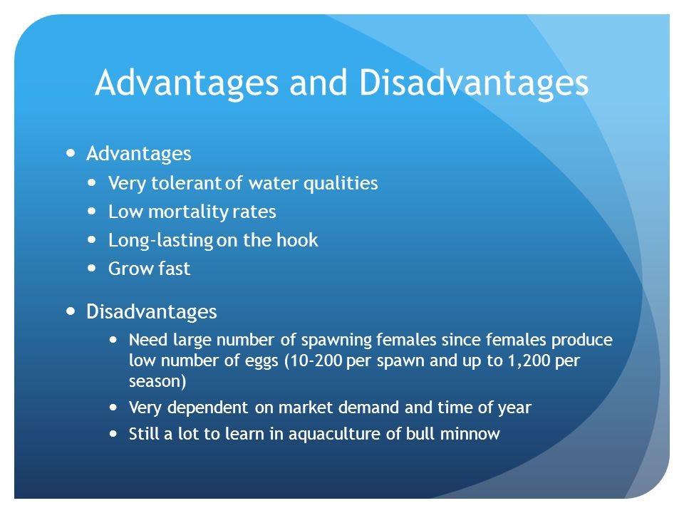 Advantages and Disadvantages Advantages Very tolerant of water qualities Low mortality rates Long-lasting on the hook Grow fast Disadvantages Need lar