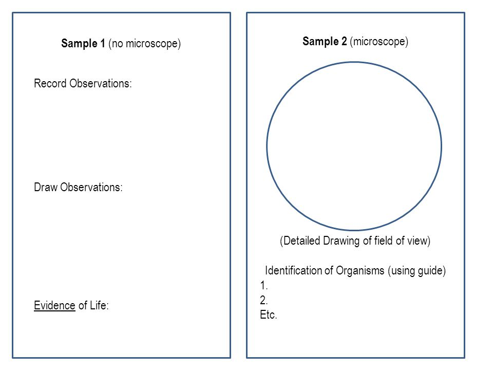 Sample 1 (no microscope) Record Observations: Draw Observations: Evidence of Life: Sample 2 (microscope) (Detailed Drawing of field of view) Identific