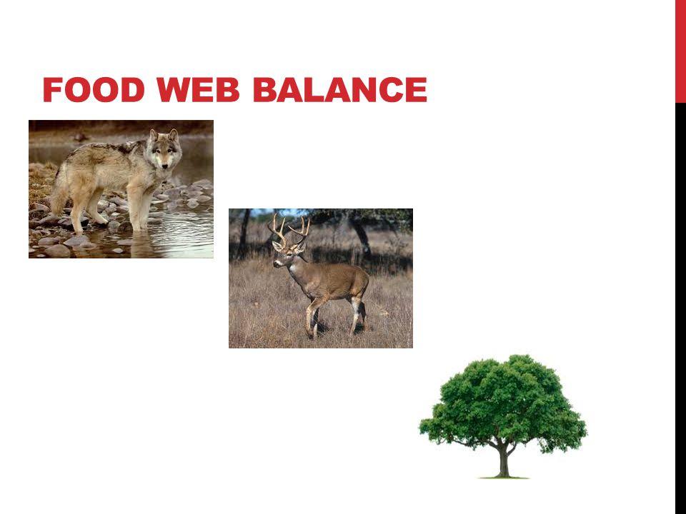 FOOD WEB BALANCE