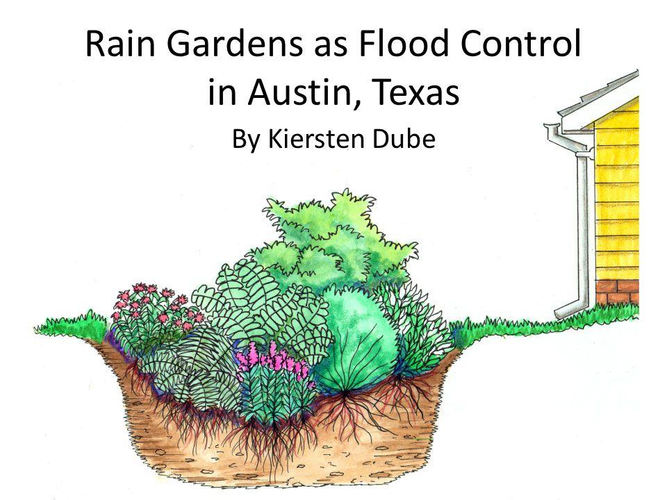 Rain Gardens as Flood Control in Austin, Texas By Kiersten Dube