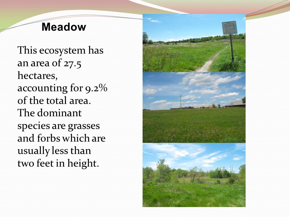 Meadow This ecosystem has an area of 27.5 hectares, accounting for 9.2% of the total area.