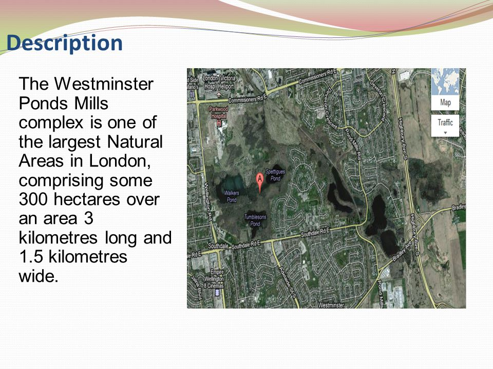 The Westminster is significant because it possesses a rich variety of natural habitats in a relatively undisturbed state, even though it is situated within the boundaries of a major urban centre.