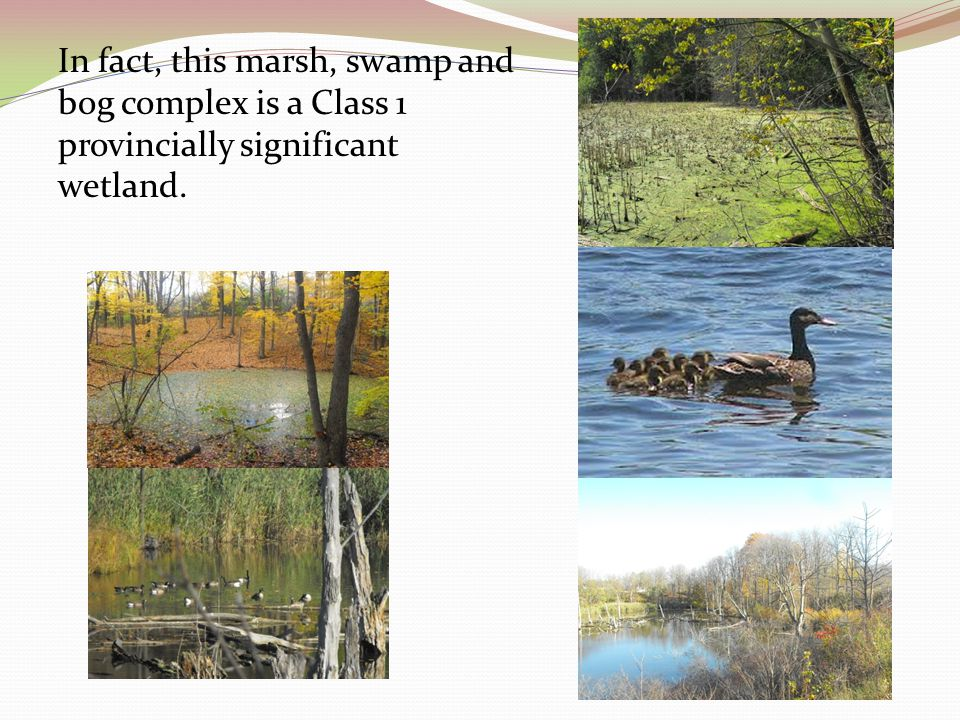 In fact, this marsh, swamp and bog complex is a Class 1 provincially significant wetland.