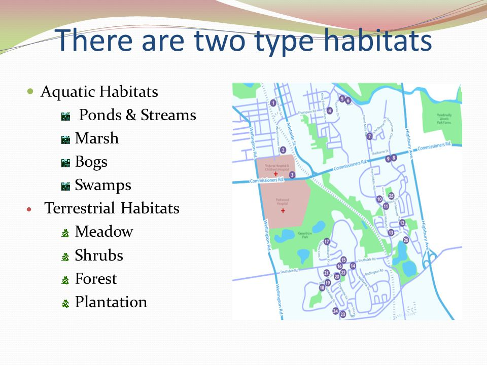 There are two type habitats Aquatic Habitats Ponds & Streams Marsh Bogs Swamps Terrestrial Habitats Meadow Shrubs Forest Plantation