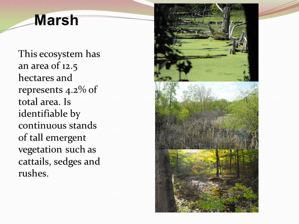 Marsh This ecosystem has an area of 12.5 hectares and represents 4.2% of total area.