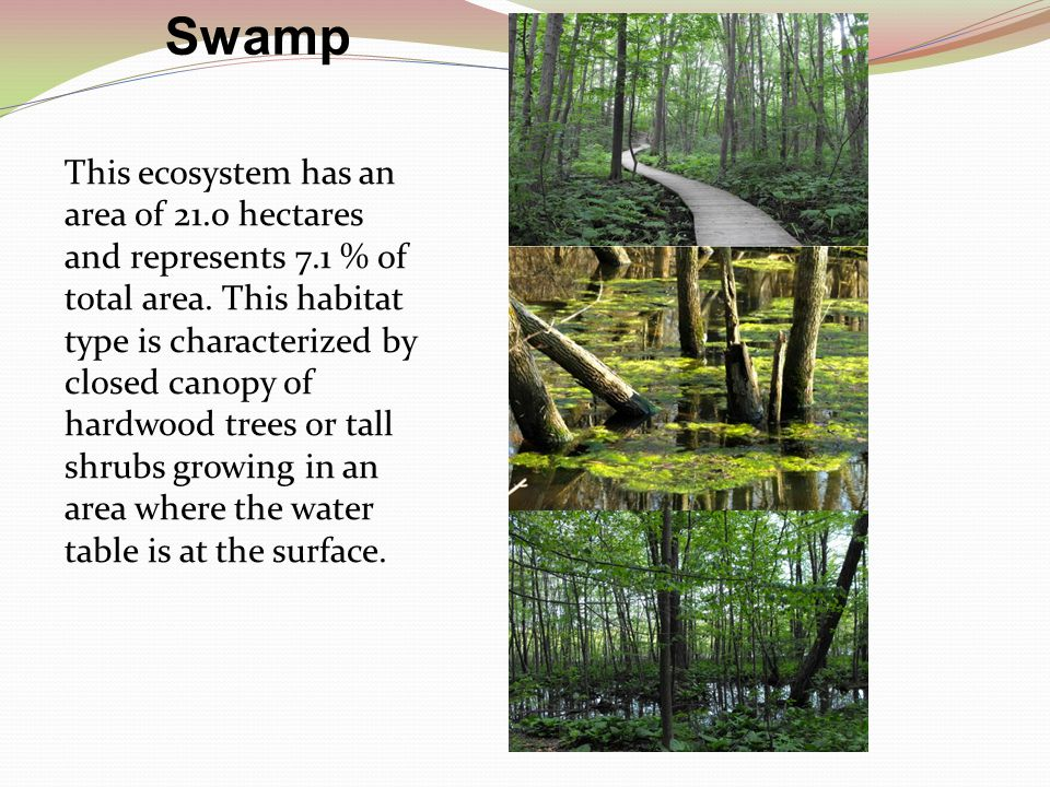 Swamp This ecosystem has an area of 21.0 hectares and represents 7.1 % of total area.